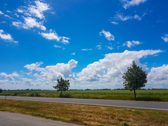 Tree Cloud - Sky Landscape Sky Blue Day Beauty In Nature Outdoors Road Ontheroadagain EyeEm Nature Lover EyeEmNewHere Thatway