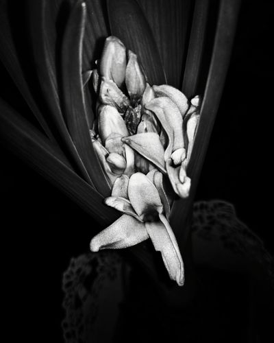 Beauty....❤ ! #blackandwhitephotography #blackandwhite #black #and #white #photography #magenta #darkness Blackandwhitephotography Blackandwhite Black And White Photography Darkness Blooming Flower Beautiful Bestmoment Beautiful Nature Close-up Flower Head Blooming Single Flower In Bloom