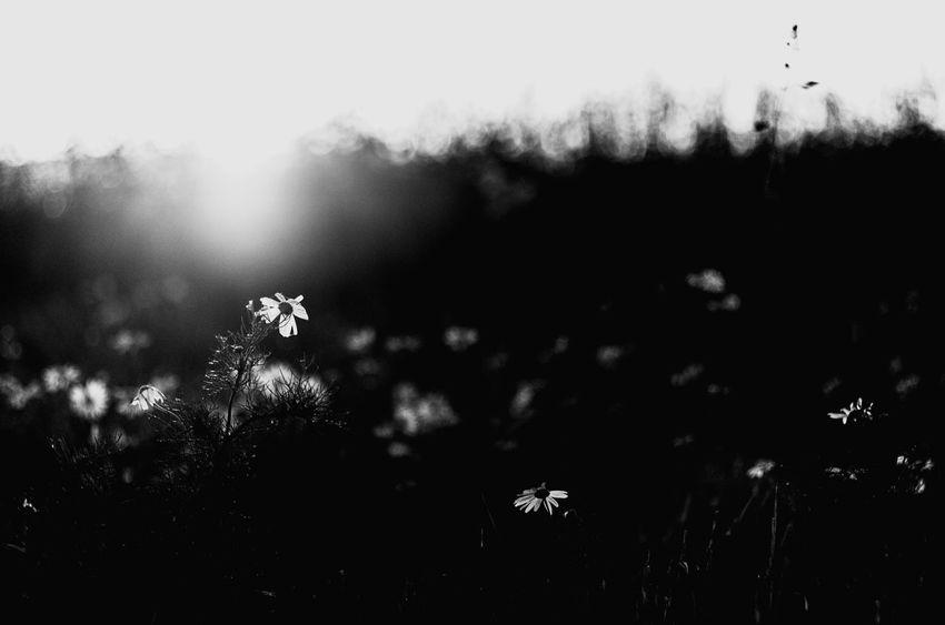 Late summer sundown... Summertime Grainfield Black & White Bokehlicious Sundown Pentax Nature Photography Nature Sunlight Klaquax@home