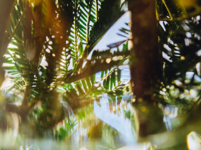 Tree Plant Leaf Selective Focus Water Growth Plant Part No People Day Beauty In Nature Nature Close-up Palm Tree Reflection Green Color Tranquility Outdoors Tropical Climate Lake Leaves Palm Leaf