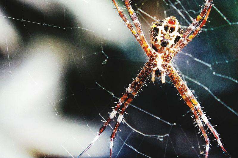 Supermakro Spider Makro Photography WEBS Closeupshot Nature Animal Photography Animal