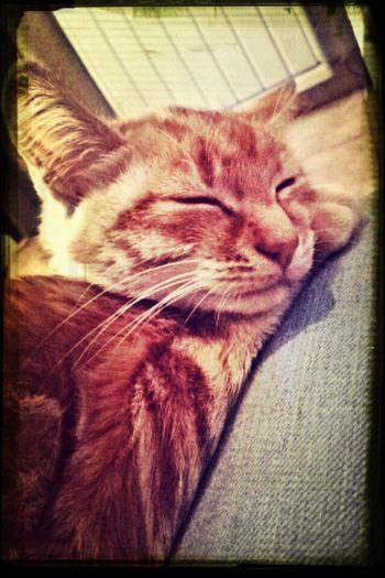 My Cat♥ he so sweety ?❤️