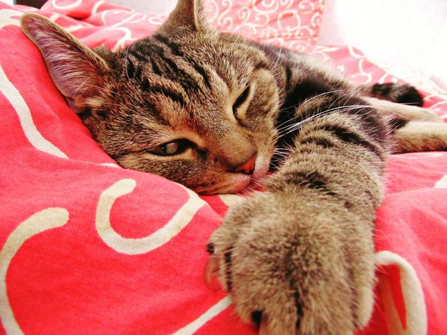 Cat Cats Folowme кот котэ няша лапа пупсик усатик красота Природа Pet Portraits