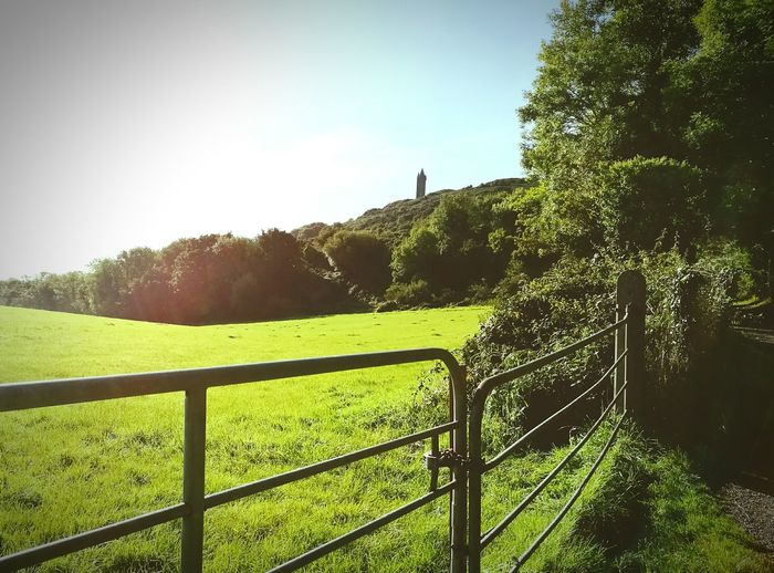 Scrabo Tower Tranquility Tree Grass Landscape Sky Sunbeam Nature Grassy Remote Beauty In Nature EyeEm Best Shots EyeEm Nature Lover Greeneryeverywhere Ireland 🍀 Nature Photography Rock Formation