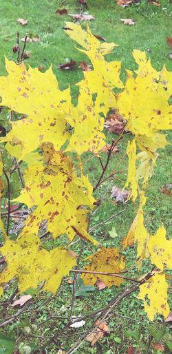 fall time Fall
