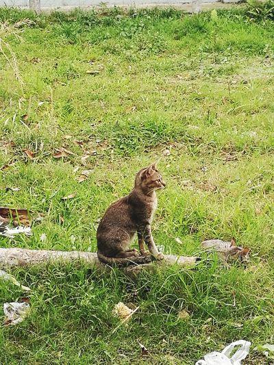 Catching Eyes Cat♡ Kachinland Animal Waiting For Food