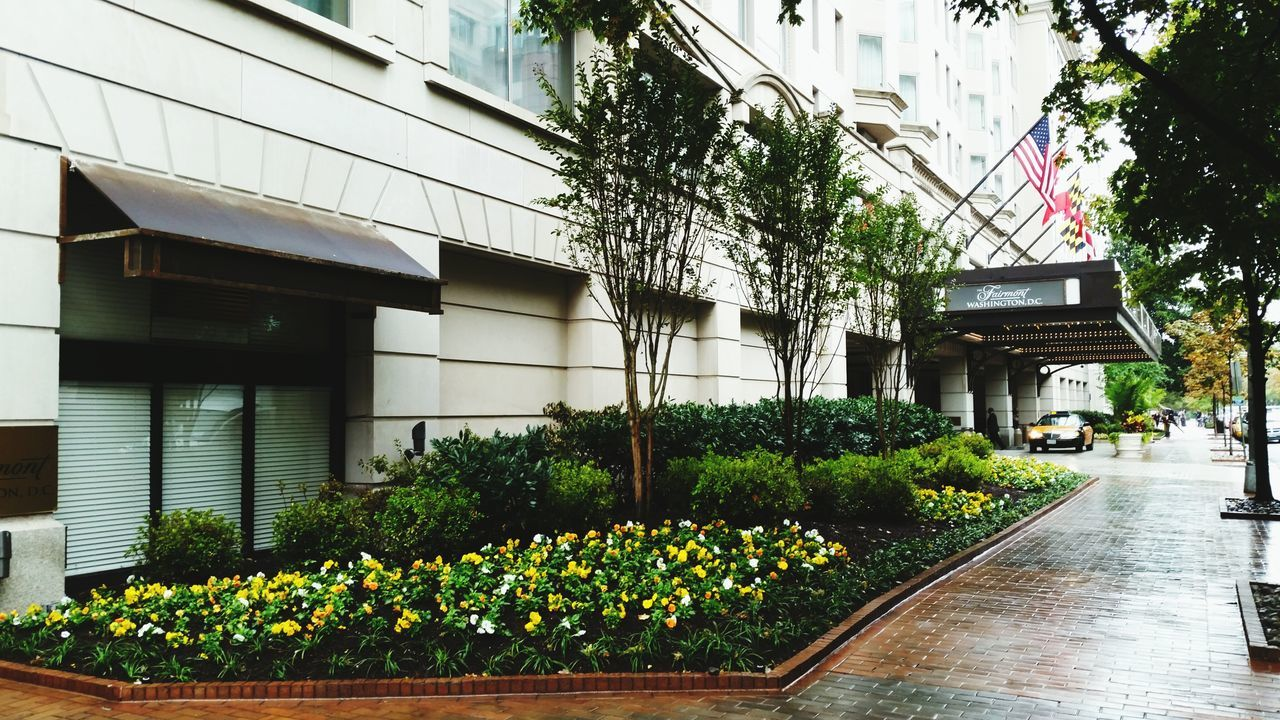 building exterior, built structure, architecture, growth, plant, day, potted plant, outdoors, tree, no people, flower, nature