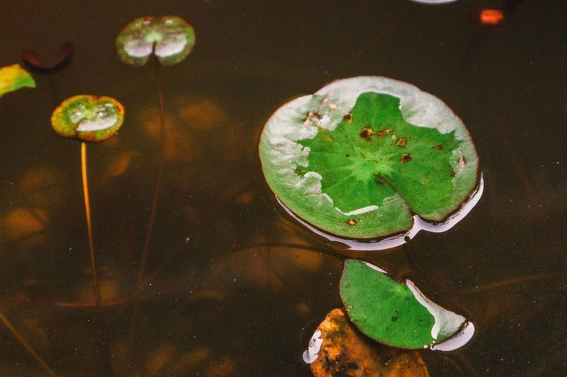 High angle view of leaves floating on table