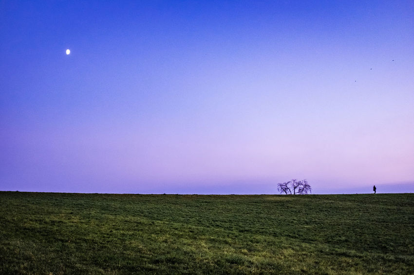 Sky Field Land Landscape Environment Plant Grass Copy Space Tranquil Scene Tranquility Beauty In Nature Scenics - Nature Clear Sky Nature No People Green Color Horizon Horizon Over Land Non-urban Scene Outdoors Purple