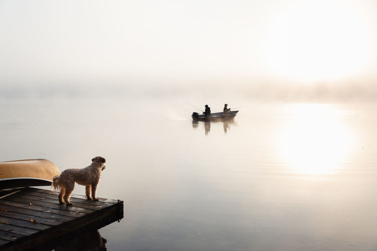 Two dogs on boat in sea against sky