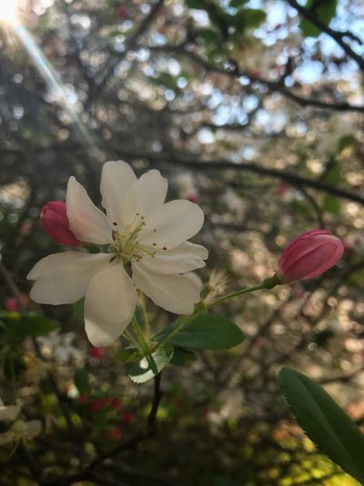 EyeEm Nature Lover Eye4photography  EyeEm Best Shots EyeEm Gallery Plant Flower Flowering Plant Freshness Fragility Growth Vulnerability  Springtime Day Flower Head Beauty In Nature Nature Close-up Inflorescence Tree No People Focus On Foreground Petal Pink Color Blossom