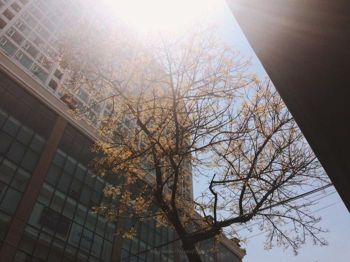 Tree Low Angle View Architecture Built Structure Sky Building Exterior Plant