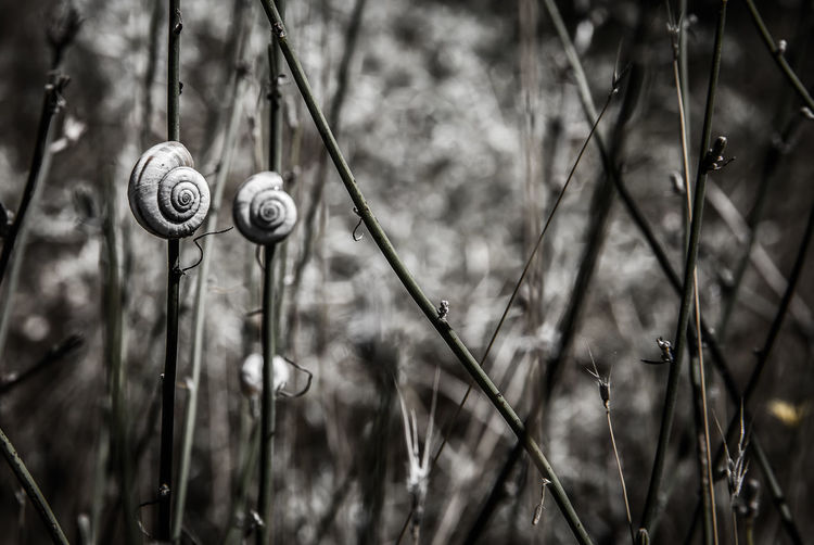 Animal Themes Animals In The Wild Beauty In Nature Close-up Day Focus On Foreground Fragility Gastropod Grass Nature No People One Animal Outdoors Plant Snail Kardzhali