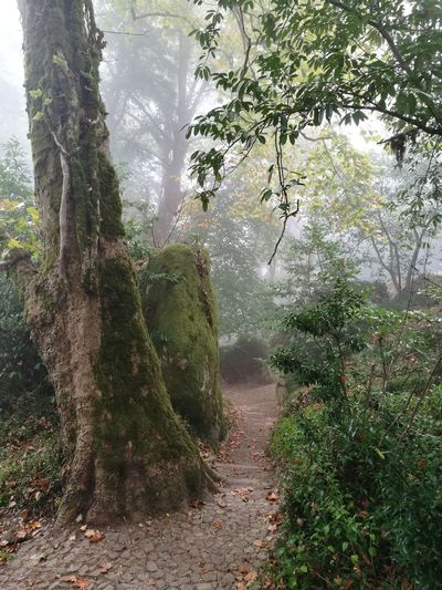 way to sintra castle Soonjourney MyWanderLust Forest Natural Tree Water Branch Sky Foggy Tree Trunk Mist Woods Plant Life Weather