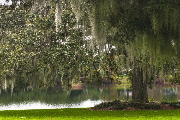 GayneGirlPhotography Eyeemphotography Eyembestshots EyeEm Best Shots - Nature EyeEm Nature Lover EyeEm Best Shots - Landscape Orlando Loch Haven Park Orlando Florida The City Beautiful