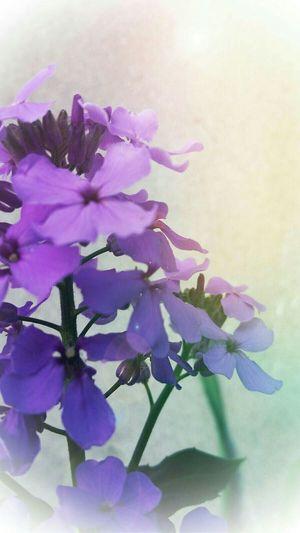 Photo Des Fleurs Soft