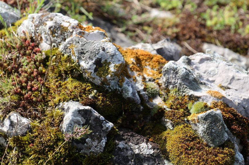 Nature No People Rock - Object Outdoors Beach Moss Beauty In Nature Day Water Lichen Close-up