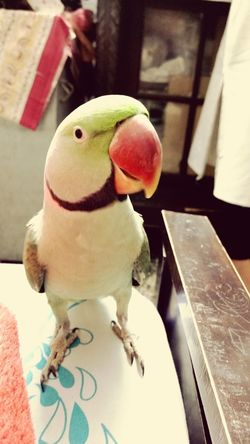 Feathered Friend Approaching Wings Of Desire Mitthu Parrot Green It Is Curious ? Bubbly Pecking Order EyeEmNewHere