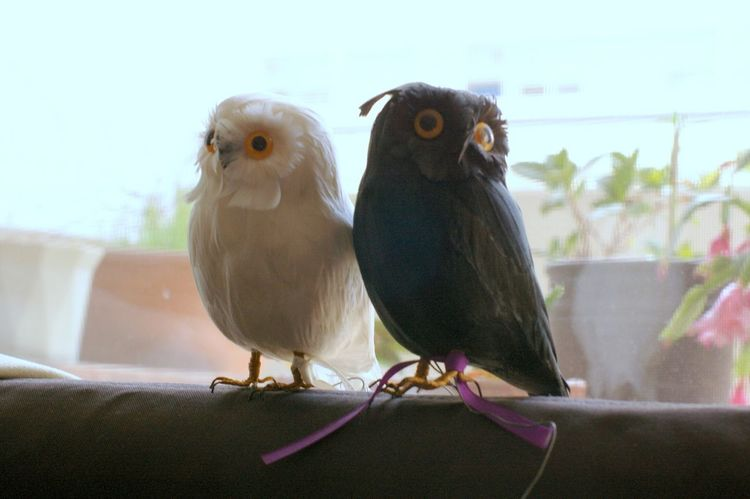 Owl Tokyo フクロウ