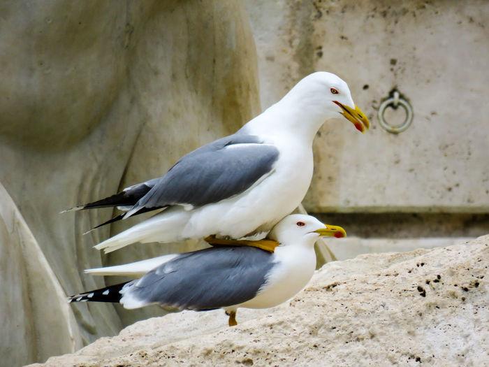 Animal Themes Animals In The Wild Beak Bird Focus On Foreground Full Length Nature Tranquility Wildlife Zoology