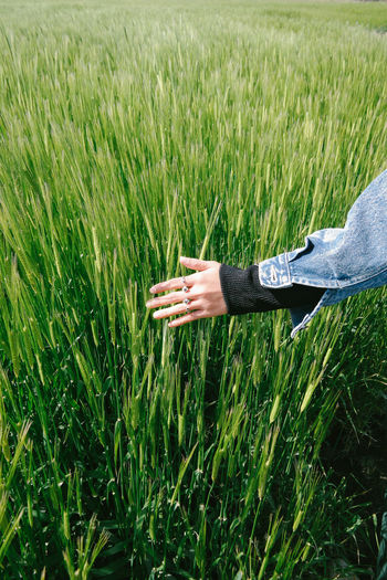 A girl waving through green wheat grass. Agriculture Beauty In Nature Cereal Plant Close-up Crop  Day Field Grass Green Color Growth Human Body Part Human Hand Nature Nature Textures One Person One Young Woman Only Outdoors People Rural Scene Wheat Young Adult Enjoy The New Normal
