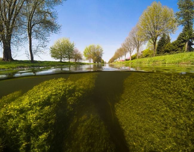 River Niers in Germany near the town of Willich Landscape Nature Niers Over Under Over Under Water River Split Level Split Level Photography Underwater underwater photography Water