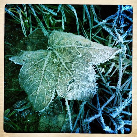 Gefrorenes Blatt Rauhreif Winter Kälte Kalt Blätter Jahreszeit Jahreszeiten Blatt