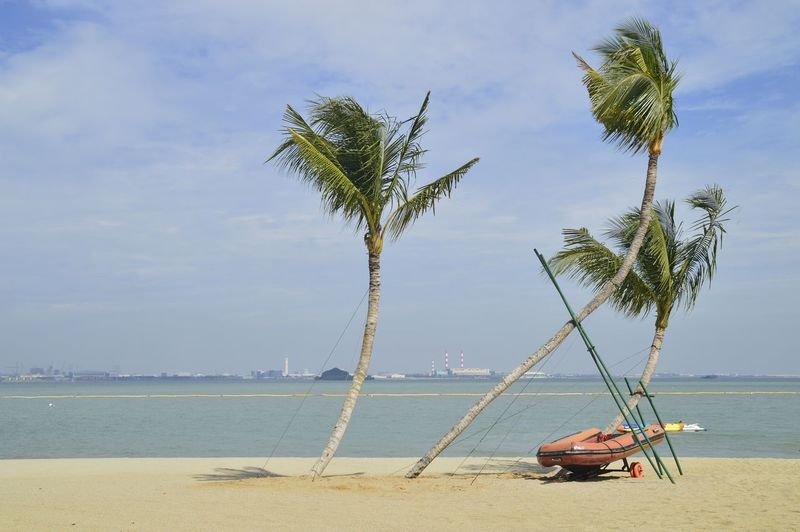 coconut trees at the beach Beach Beauty In Nature Day Horizon Over Water Nature Nautical Vessel No People Outdoors Palm Tree Sand Scenics Sea Sky Tranquil Scene Tranquility Tree Water