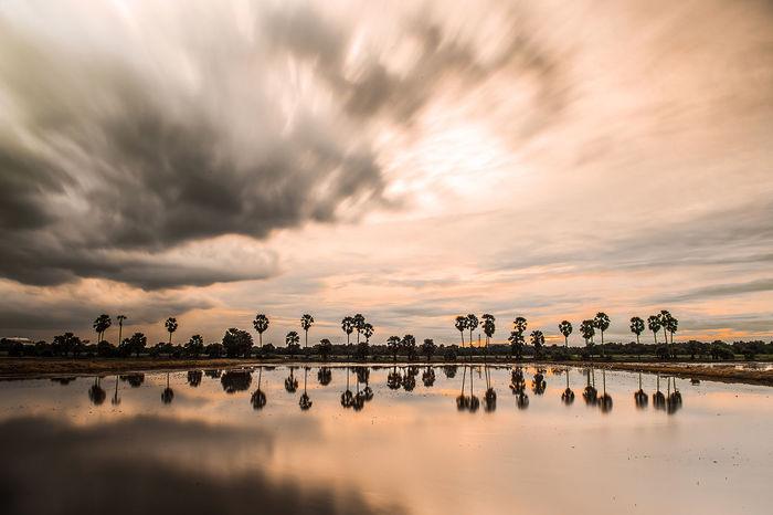 Flamingo Bird Water Sunset Dawn Safari Animals Beauty Reflection Lake Tropical Climate