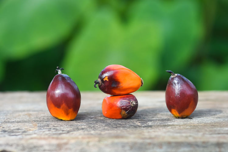 Palm oil seed Food And Drink Fruit Food Healthy Eating Wellbeing Close-up Selective Focus Freshness Day Focus On Foreground Wood - Material No People Red Nature Still Life Outdoors Table Green Color Vegetable Plant Ripe