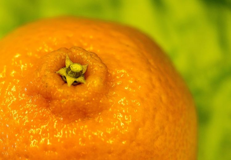 Close-up Day Focus On Foreground Food Food And Drink Freshness Fruit Healthy Eating Indoors  No People Orange Color