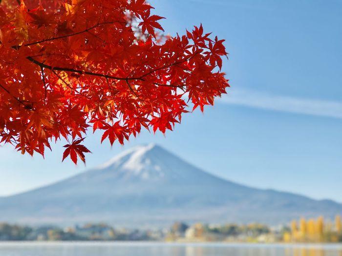 眼前紅葉,遠方富士