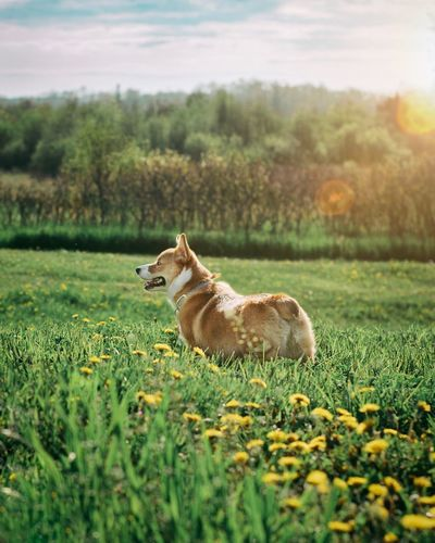 Dog looking away by plants against sky