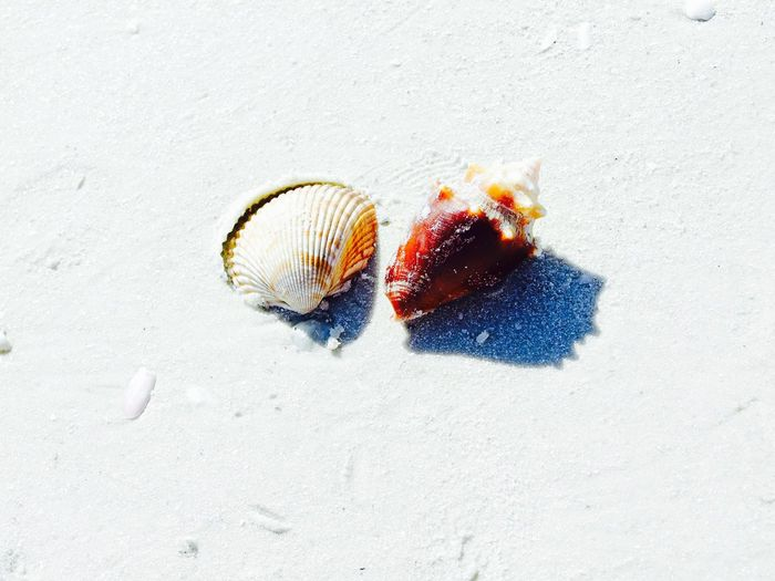 Close-up of seashells on sand