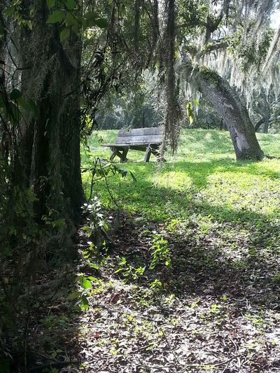 Relaxing Taking Photos Hanging Out Hello World Trees Enjoying Life Benches Relaxing Serinity Outdoors