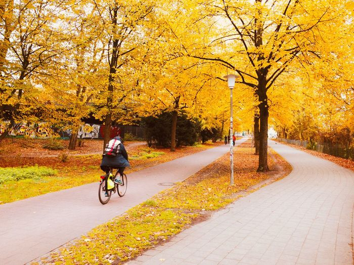 Fall Trees Bicycle Transportation Tree Plant Road Ride Real People Riding Mode Of Transportation Lifestyles Nature Activity Autumn