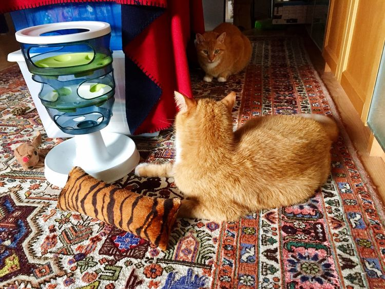 3XSPUnity Lovely Cats Cat Collection Two Cats Two Cats On The Floor Two Cats Playing Pets Katzen 💜 Cats Of EyeEm Cat Lovers 🐱💞 Catch The Moment Cats 🐱
