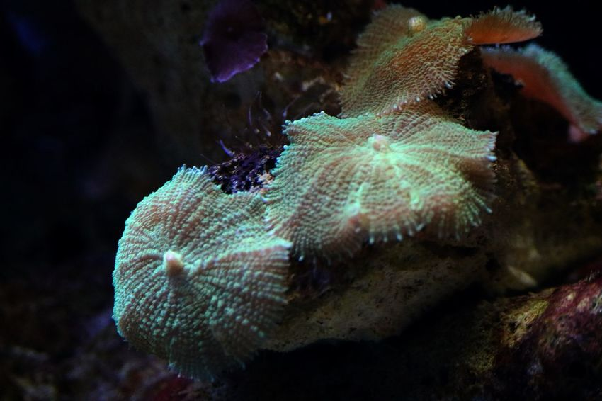 No People Nature Beauty In Nature Indoors  Dark Sea Life Sealife Aquarium Aquarium Life Aquarium Photography Seaweed Plant Growth Botany Water Underwater Clear Water Fishtank Fish Tank Tank Details Of Nature Recife Plants Plant Life Plant Part Marine Coral Close-up Ecosystem