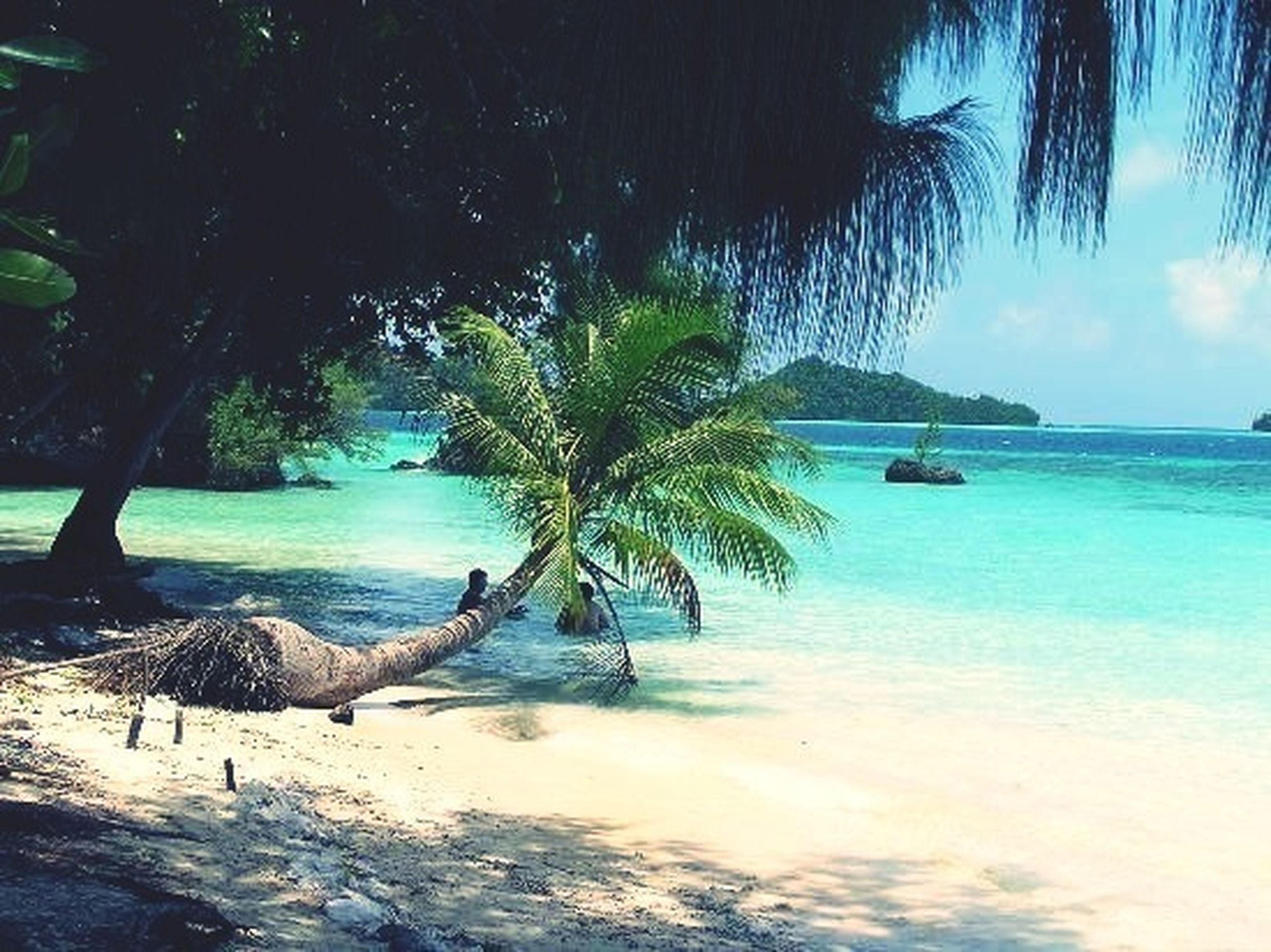 water, sea, animal themes, tree, beach, animals in the wild, palm tree, bird, wildlife, shore, tranquil scene, tranquility, nature, beauty in nature, scenics, sky, horizon over water, sand, blue, one animal