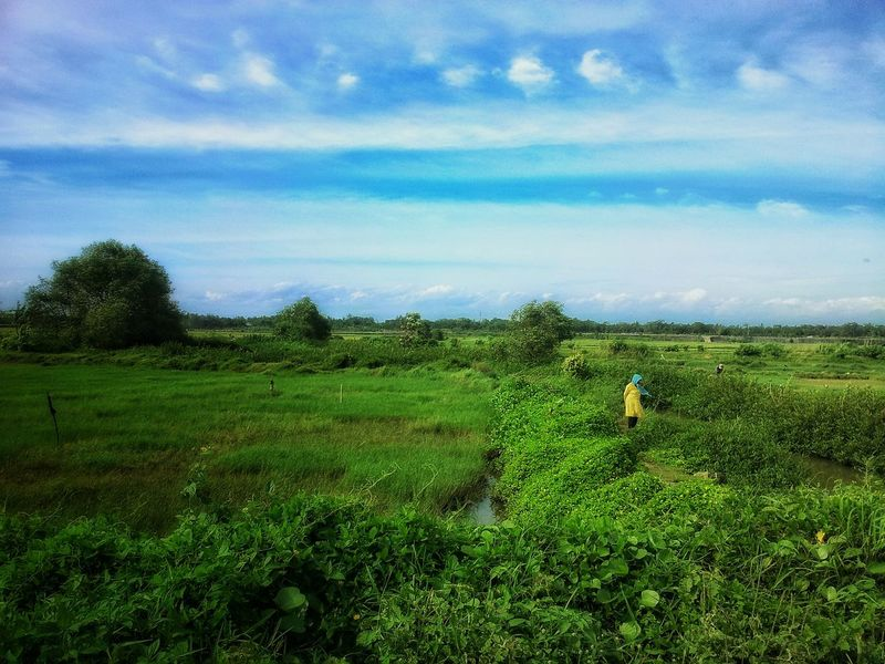 Atmosphere of the day Green Color Growth Tree Nature Sky Tranquil Scene Tranquility Landscape Field Beauty In Nature Scenics Cloud - Sky Rural Scene Grass Day Outdoors Agriculture Freshness Indonesia_photography Yogyakarta, Central Java - Indonesia Eyeemphotography EyeEm Gallery