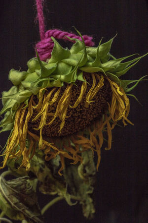 Beauty In Nature Black Background Bunch Of Flowers Close-up Flower Flower Arrangement Flowering Plant Food Food And Drink Freshness Green Color Healthy Eating High Angle View Hunged Hunged Flower Hunged Objects Indoors  Leaf Nature No People Plant Plant Part Still Life Vegetable Wellbeing