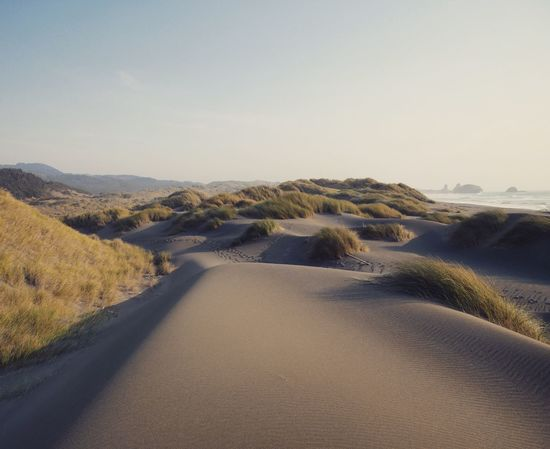 Nature Tranquil Scene Scenics Landscape Beauty In Nature Sand Outdoors Sand Dune Adventure Pacific Catching Waves Oregon West Coast Wanderlust Lumix Beach Vacations Empty Places Roadtrip The Week On EyeEm Coastline Wilderness
