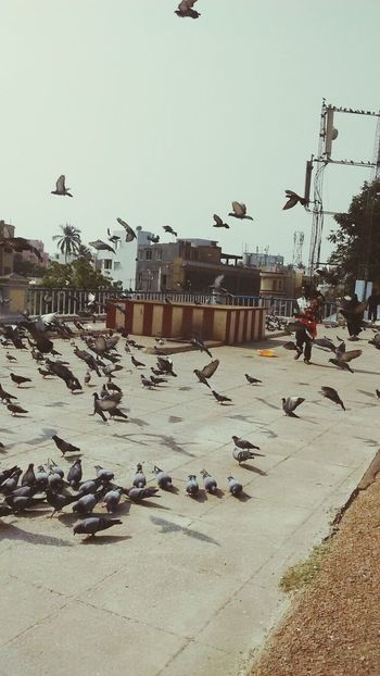 Taking Photos Mobilephotography Doves Dove Love Birds🐦⛅ Hanging Out