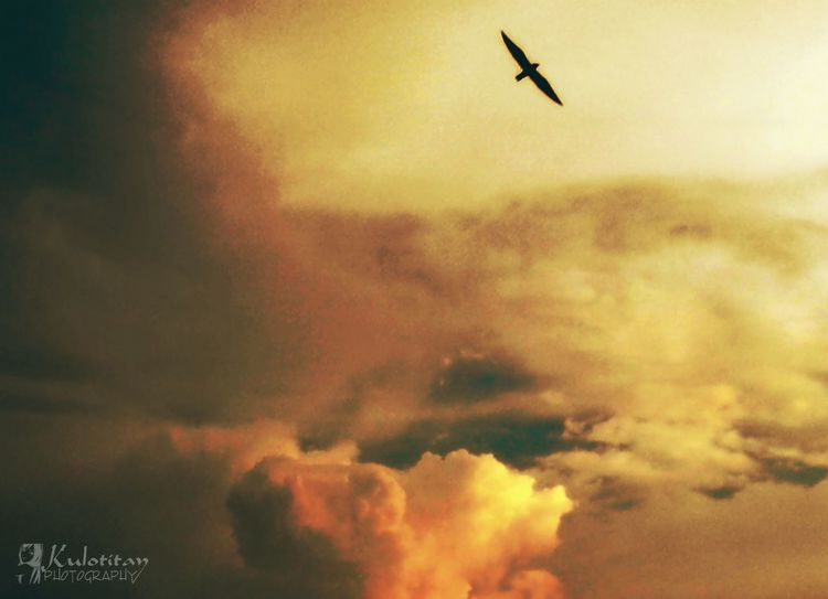 Eyeem Philippines Soaring Up Above Sky_ Collection Sky High