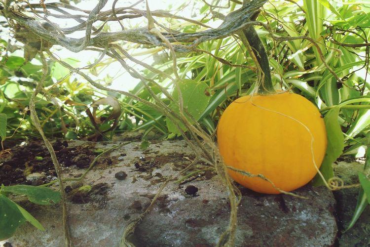 Fall Beauty Mini Pumpkin In The Garden Cosecha Stay Home Taking Photos Hello World Beautiful Natural Beauty