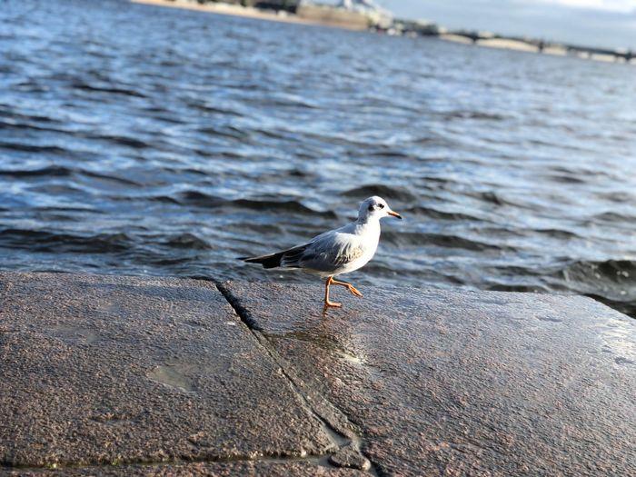 Seagull perching on the beach