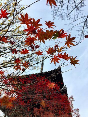 真如堂 Kyoto 紅葉 もみじ 三重の塔