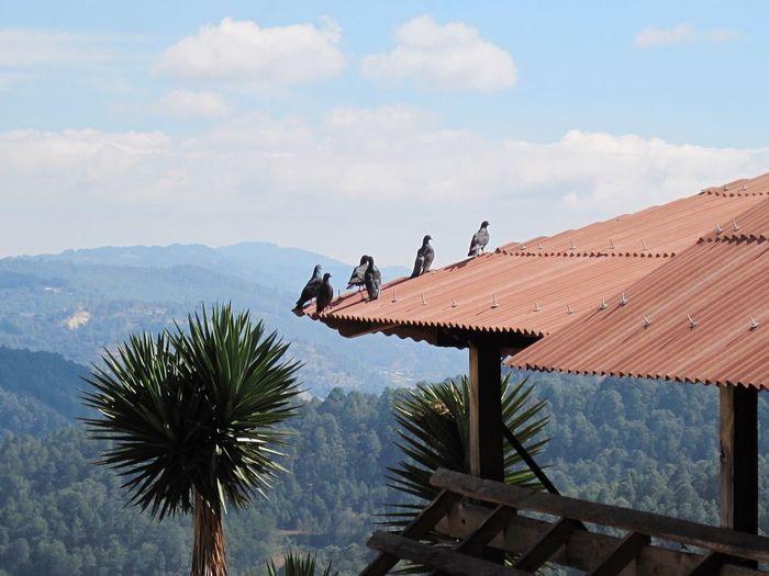 Los lugares altos siempre resguardan bellos paisajes... No Filter Relaxing Palomas Vegetacion