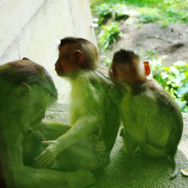 EyeEmNewHere Family Together Monkey Familiar Like Human Stay Together SUPPORT Love Grow Up Hidden Beauty Tranquil Scene Rural Scene Growth Naturelovers Colours Best EyeEm Shot EyeEm Best Shots Fascination This Is Family Visual Creativity