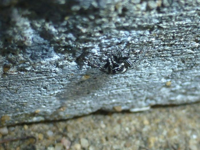 Close-up of ant on water